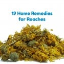 19 Home Remedies for Roaches