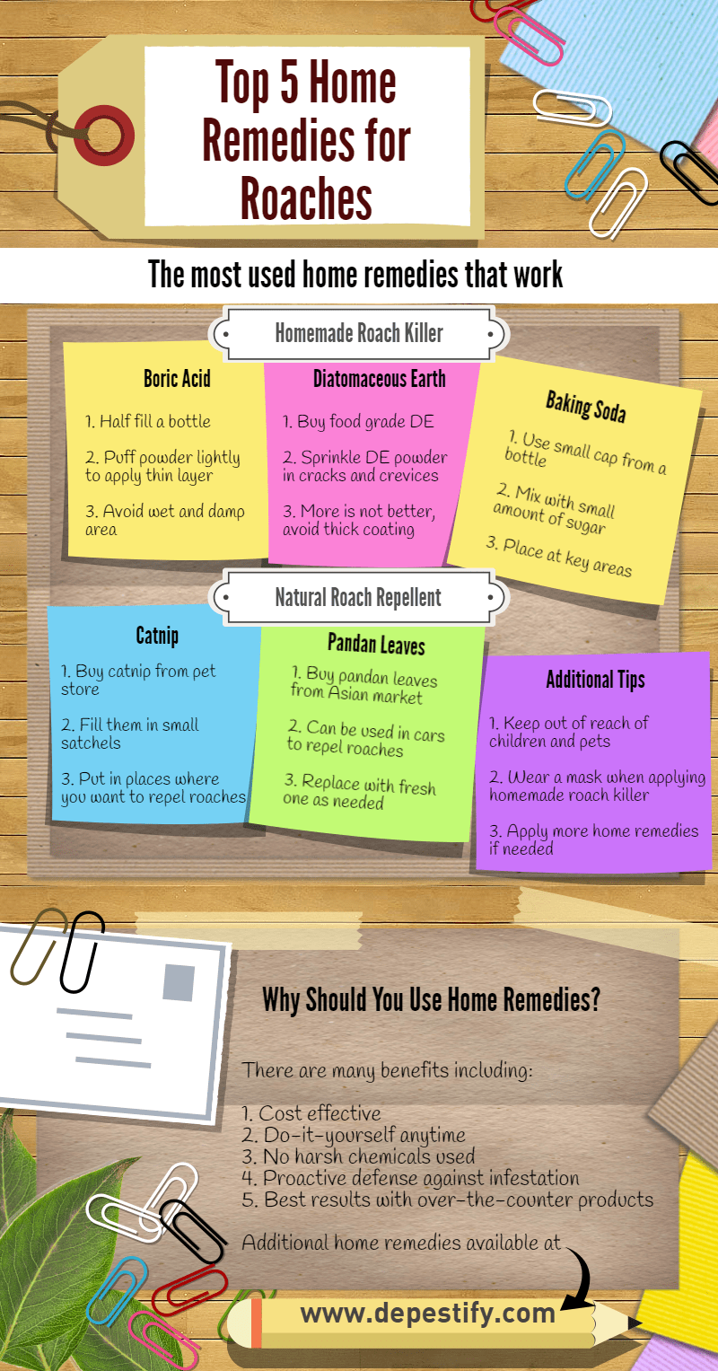 Home Remedies for Roaches Infographic