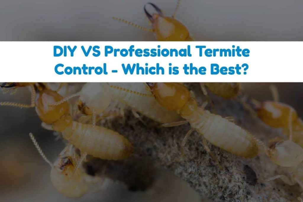 How To Get Rid Of Termites On Your Own In House Outdoor - How-to-remove-termites-from-furniture