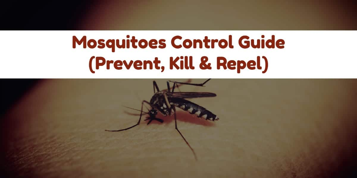 How To Get Rid Of Mosquitoes In My House Naturally